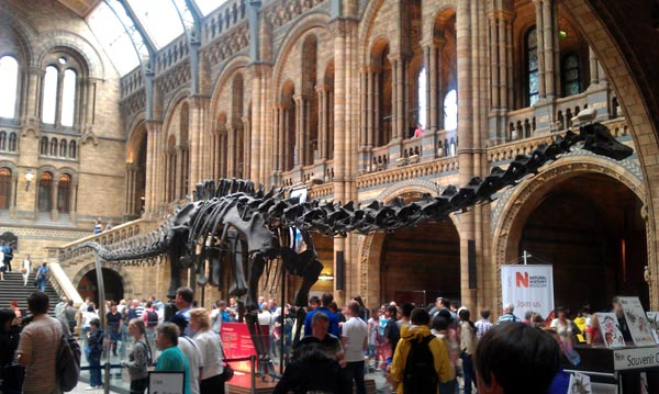 Natural History Museum London Times